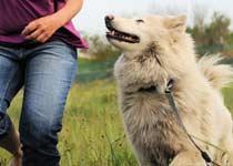 Hunde-Grundgehorsam