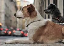 Hunde warten auf ihre Menschen
