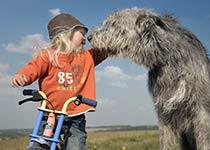 Kind & Hund gemeinsam spielen