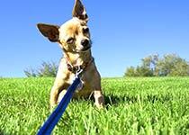 Erziehung für kleine Hunderasse