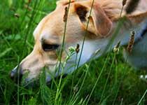 Hunde mit Suchspielen auslasten