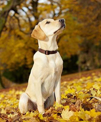Hund schaut aufmerksam