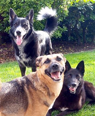 drei glückliche Hunde