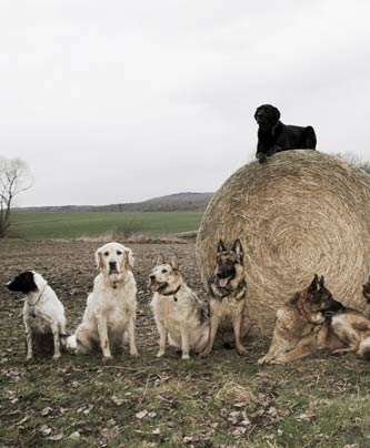 Hunde machen BLEIB