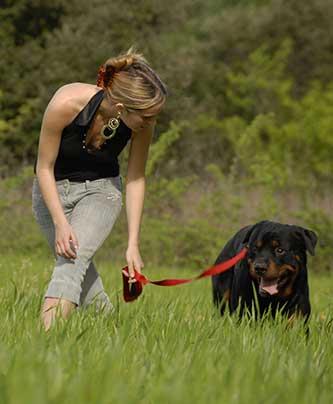 Hunde-Beziehung.jpg