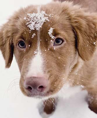 Hundetraining im Winter