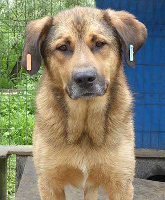 Tierschutzhund Oli