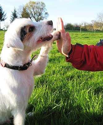 Hund gibt five