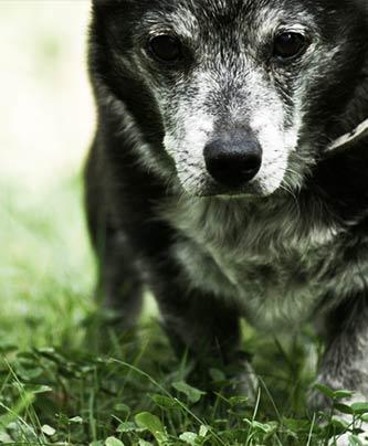 Älterer Hund braucht Beschäftigung