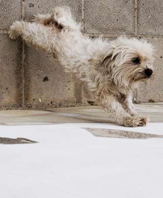 Hund beim Yoga - Doga