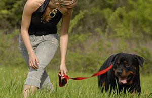Hundemensch wird einzeln gecoacht