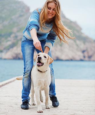 Frau beim Trick üben mit dem Labrador