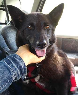 gerettet Tierschutzhund